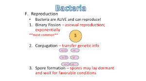 Asexual Reproduction Worksheets I Viruses A Definition I Parasitic Non Cellular Particles That