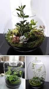 36 modern terrariums terraria plants and gardens