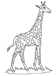 easy to color coloring pages giraffe giraffe coloring pages