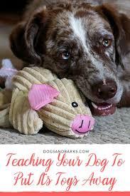best 20 dog activities ideas on pinterest diy dog toys dog