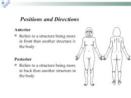 Picture Of Anatomical Position Introduction To Anatomy