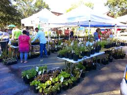 plants native to pennsylvania plant sale events welcome to meadowsweet native plant farm