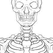 types of joints the skeleton u0026 bones anatomy u0026 physiology
