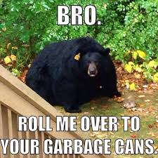 Bear Stuff Meme - obese black bear bro humor and belly laughs
