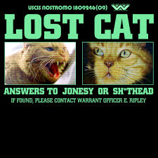Cat Alien Meme - lost cat inspired by alien have you seen this cat also what was