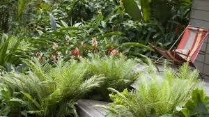 Tropical Plants Pictures - beautiful gardens with tropical plants youtube