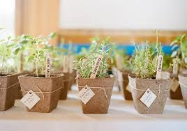 plant wedding favors 14 botanical wedding favors for your greenery themed wedding