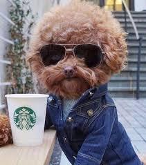 Hipster Dog Meme - funny pics 33 inspirationally random oddities team jimmy joe