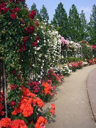 Pictures Of Gardens And Flowers by Rose Garden Wikipedia