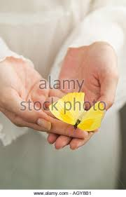butterfly touch stock photos butterfly touch stock images alamy