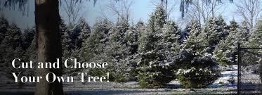 Brookside Christmas Tree Farm Lehigh Valley Poconos Pa Area