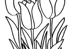 download tulip coloring ziho coloring