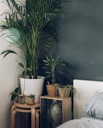 Earthy Room Decor by Bedside Plants Haarkon India U0026 Magnus Haarkon U2022 Instagram