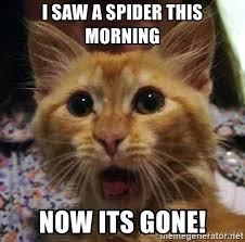 I Saw A Spider Meme - i saw a spider this morning now its gone crazy cat meme generator