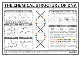 compound interest the chemical structure of dna