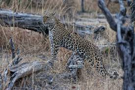 african safari animals preparing for a safari trip to africa
