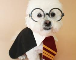 Halloween Dogs Costumes Harry Potter Dog Costume Halloween Dog Costume Halloween Pet