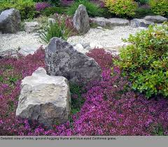 Backyard Ground Cover Options 41 Best Ground Cover Images On Pinterest Ground Covering Irish