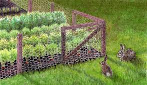 rabbit wire fence garden fence ideas easy build diy rabbit