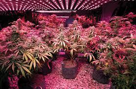 Best 25 Marijuana Grow Lights by Grow Guide Choosing The Best Lights Marijuana