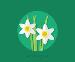 flat daffodil flowers vector art u0026 graphics freevector com