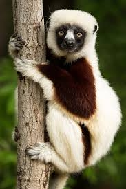 madagascar free pictures pixabay