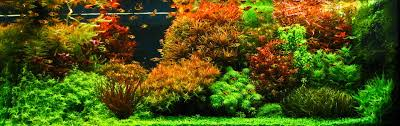 Aquascapes Com Aquascapes Where Gardening And Water Features Meet