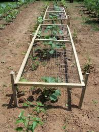 campus crops june 2014