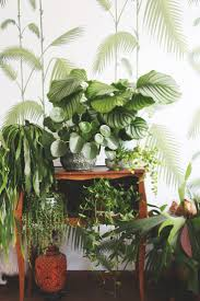 Plants That Don T Need Water Plants That Don T Need Water Saving In The Garden Houselogic Dont
