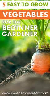 5 easy to grow vegetables for the beginner gardener