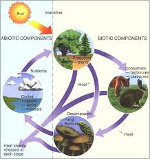 what is the difference between biotic and abiotic factors socratic