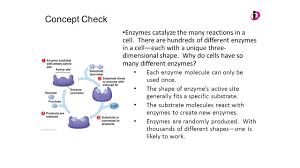 ap biology review session 2 ppt video online download