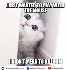 White Cat Meme - memes white cat funny cute angry grumpy cats memes pinterest