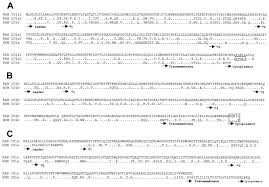 si ge soci t g n rale 1 cd1 genes in rabbit the journal of immunology