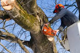 how to choose a tree trimming service in lancaster pa p2p12