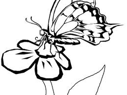 29 butterfly flower coloring pages butterfly flower coloring