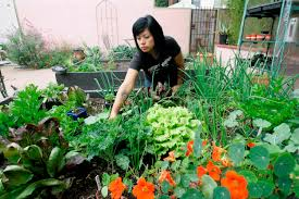 lawn u0026 garden easy vegetable garden ideas for your living