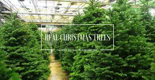 real christmas trees there s nothing like a real christmas tree here s where to buy
