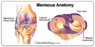 Knees Anatomy Mendmyknee Com Anatomy And Function Of The Medial And Lateral