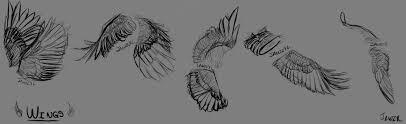 artstation wing sketches jenn wise