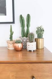 plant home decor 60 breathtaking succulent home décor ideas to amp up your indoors