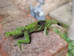 this lizard with a hole in its back on my front porch natureismetal