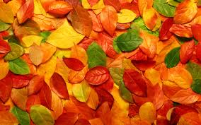 32 units of fall leaves wallpaper