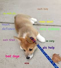 Doge Meme Meaning - 52 best doge images on pinterest ha ha doge meme and funny pics