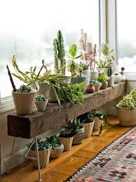 Cool Small Palnts To Grow Best 25 Plants Ideas On Pinterest Plants Indoor House Plants