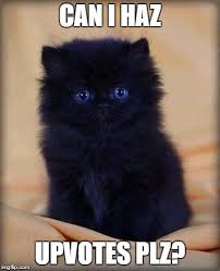 Cute Kitten Memes - insanely cute kitten memes imgflip