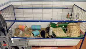 Indoor Hutch How Should I House My Indoor Guinea Pigs U2013 Celia Haddon