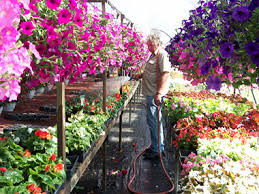 owens garden center u0026 landscaping services somerset kentucky