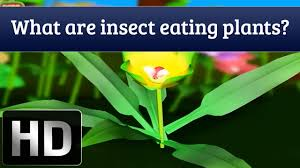 general knowledge for kids what are insect eating plants youtube