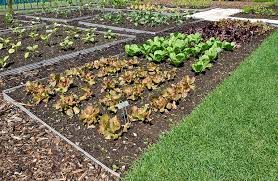 stylist and luxury how to plant a vegetable garden nice decoration